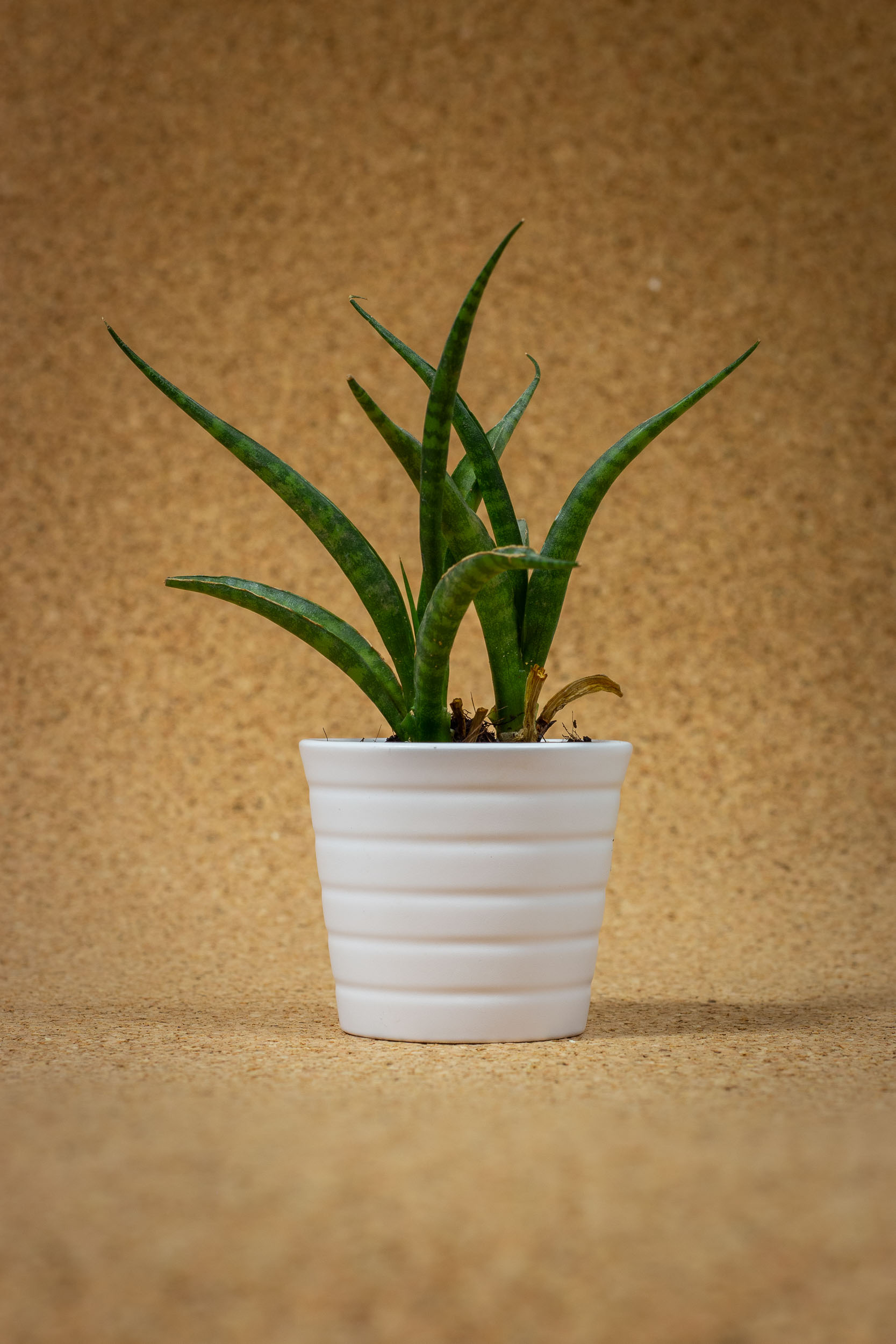 plante-photographe-besançon-gui2raw